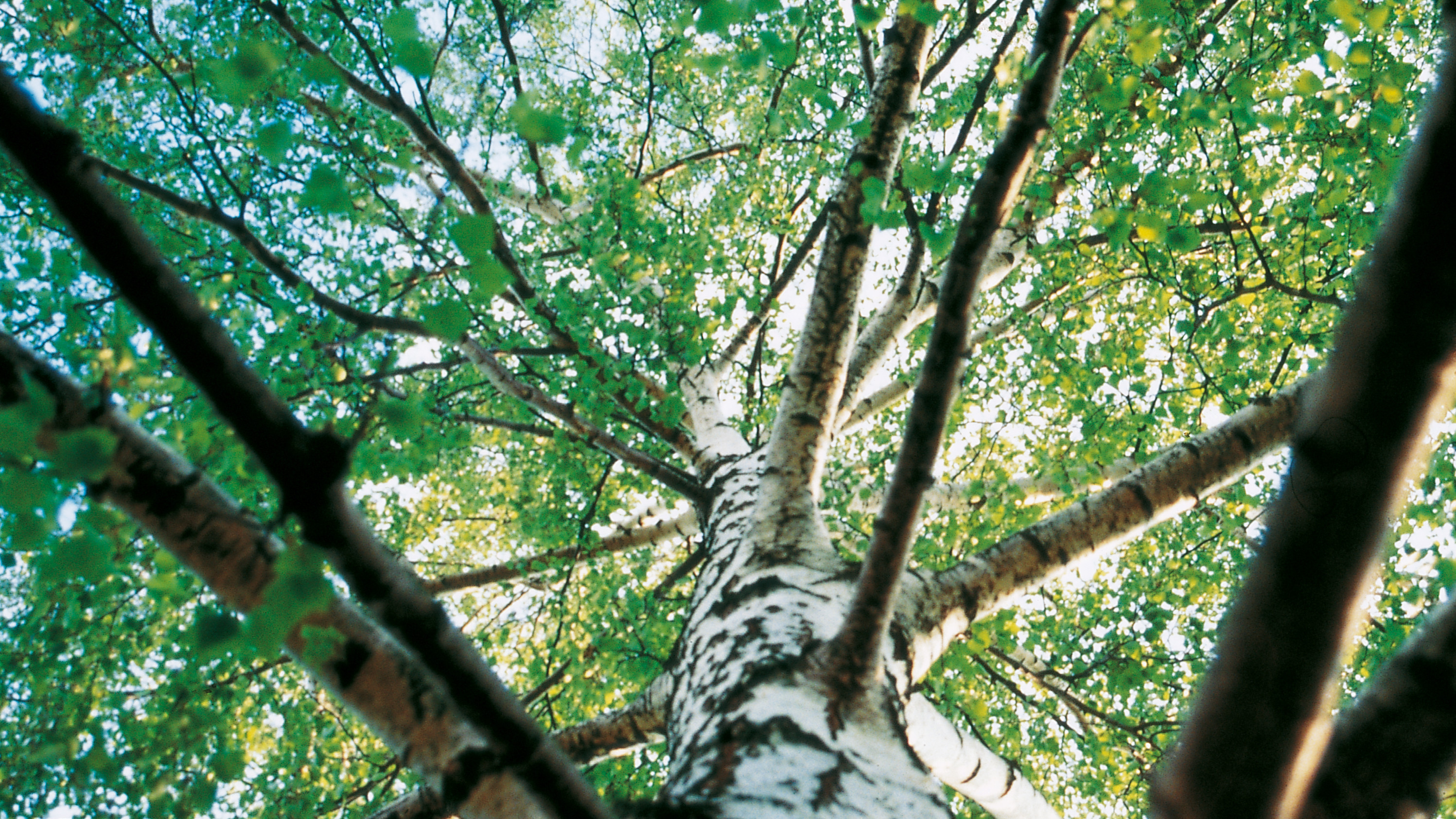 Bäume mit grünen Blättern